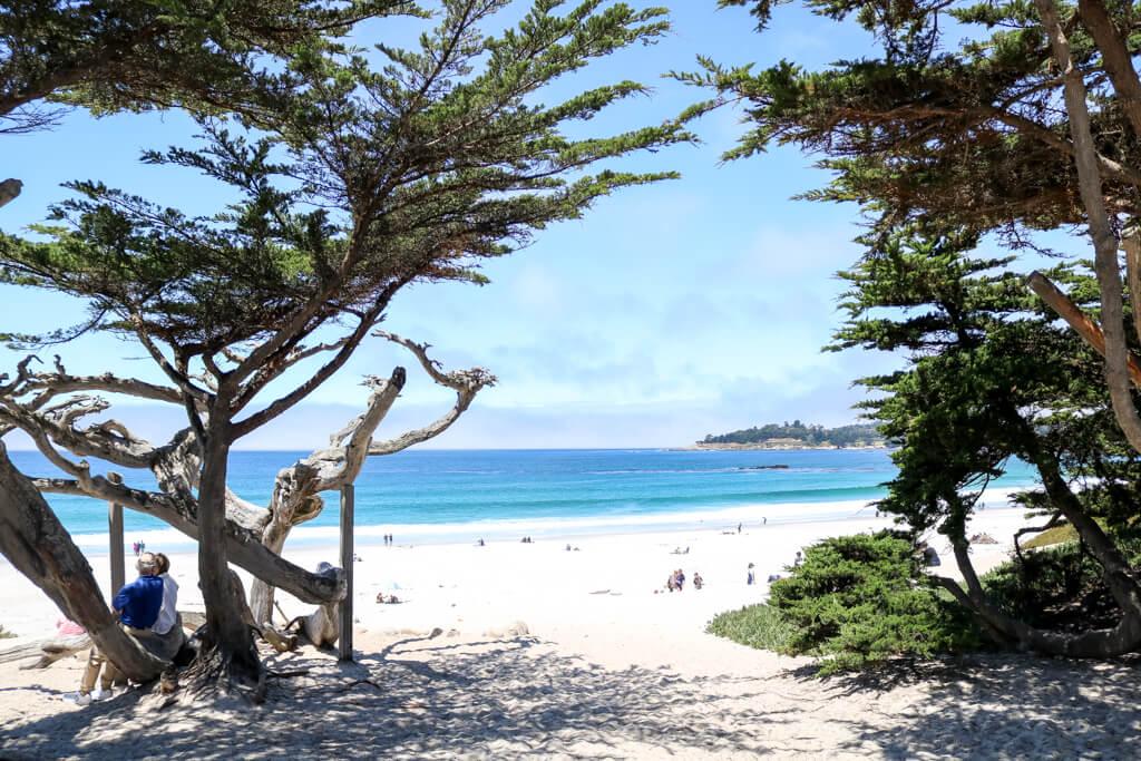Blick auf einen Sandstrand und das Meer zwischen zwei Bäumen hindurch