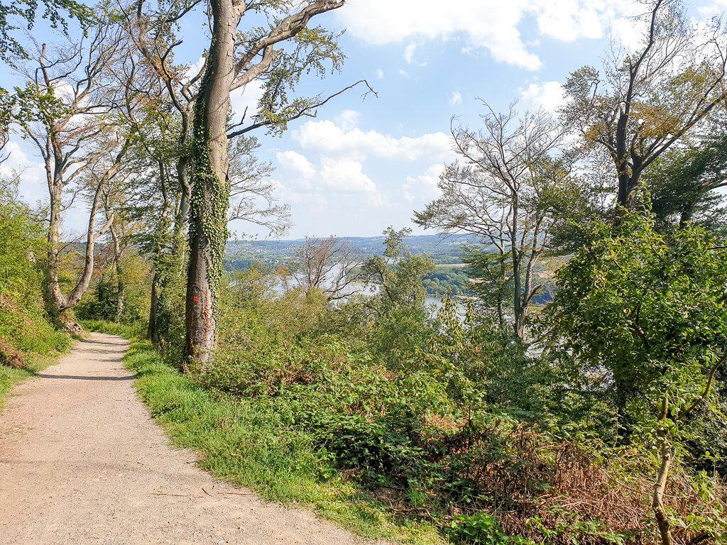 Baldeneysteig führt durch den Wald - durch die Bäume ist der Baldeneysee zu sehen