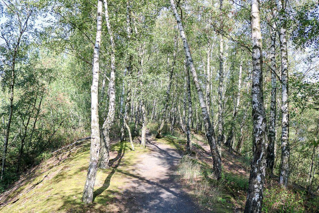 Wandern durch einen Birkenwald am Baldeneysteig
