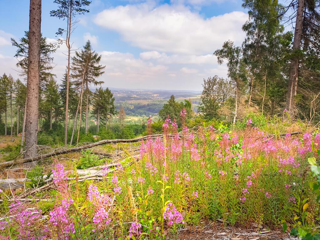 Blick über lila blühende Blumen und einige Bäume auf einen Ort in der Ferne