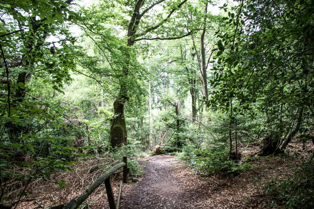 Wanderweg im Wald inmitten grüner Bäume