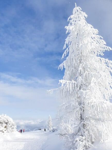schneebedeckter Baum in den Bergen