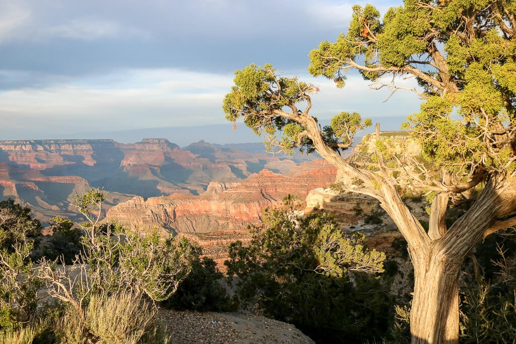 Grand Canyon Nationalpark - Powell Point - Viewpoint mit Bäumen