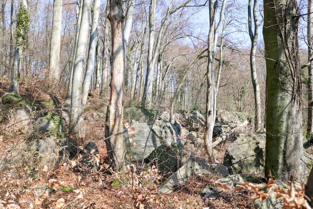 Felsen inmitten eines Waldes