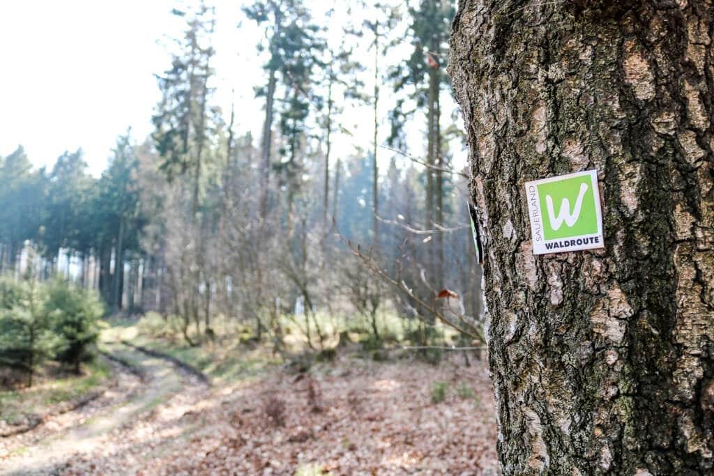 Baum mit Wanderzeichen - dahinter unscharf ein Wald mit einem Weg