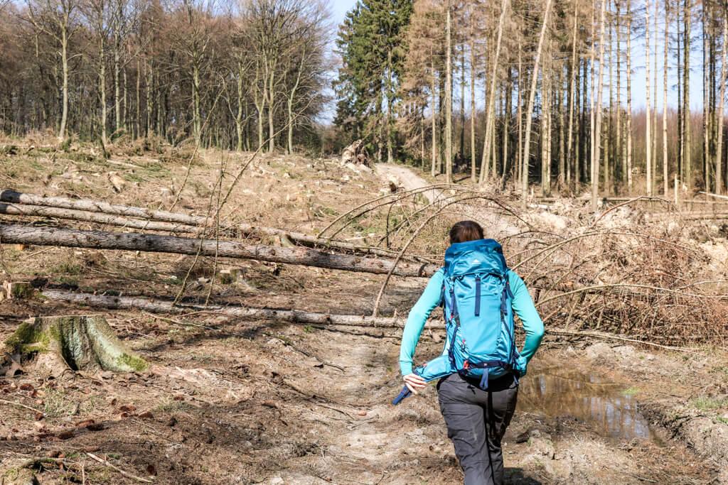 Frau läuft auf Waldweg mit umgestürzten Bäumen