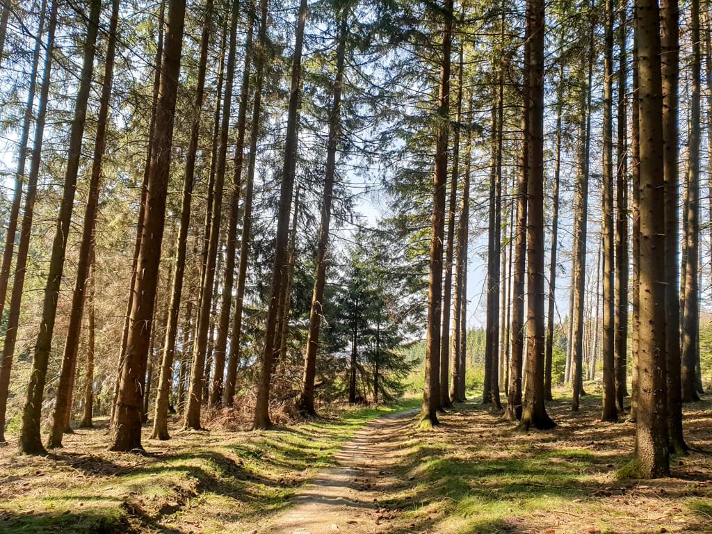 Wanderweg führt durch einen sonnendurchfluteten Wald