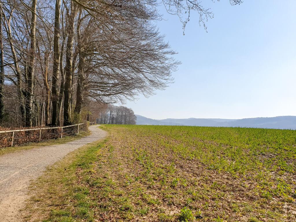 Weg führt an einem Feld entlang, auf der linken Seite kahle Bäume