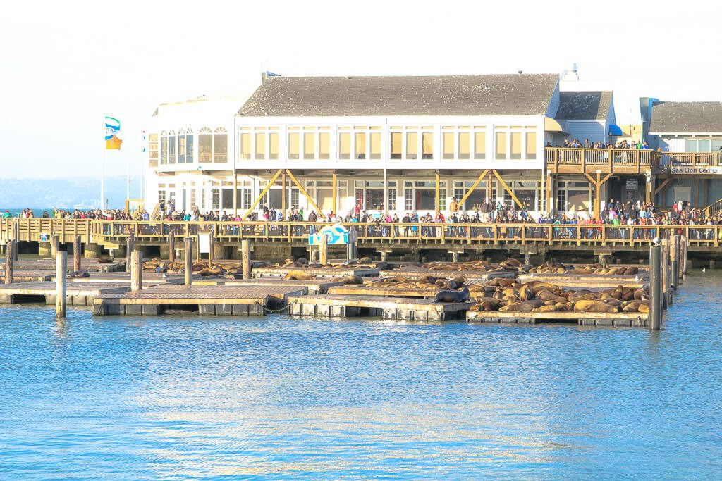 San Francisco - Fishermans Wharf - Seelöwen am Pier 39