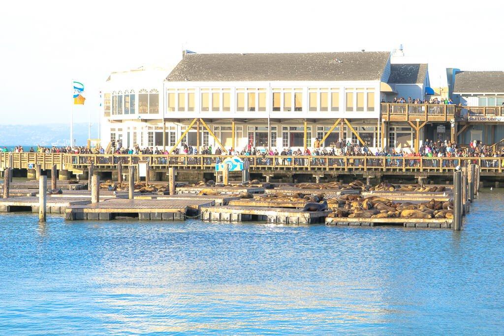 San Francisco - Fishermans Wharf - Seelöwen am Pier 39
