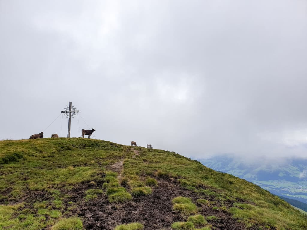 Kühe stehen bei einem Gipfelkreuz auf einer Bergkuppe im Nebel