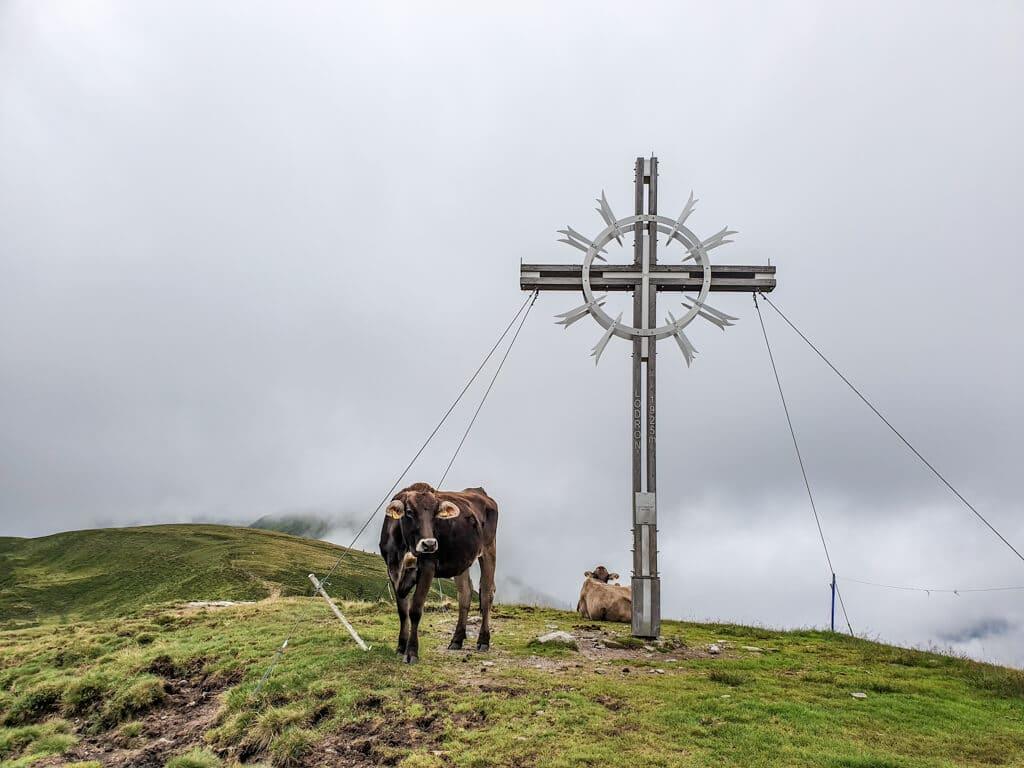 Kühe stehen vor einem Gipfelkreuz auf einem grünen Berggipfel in den Wolken