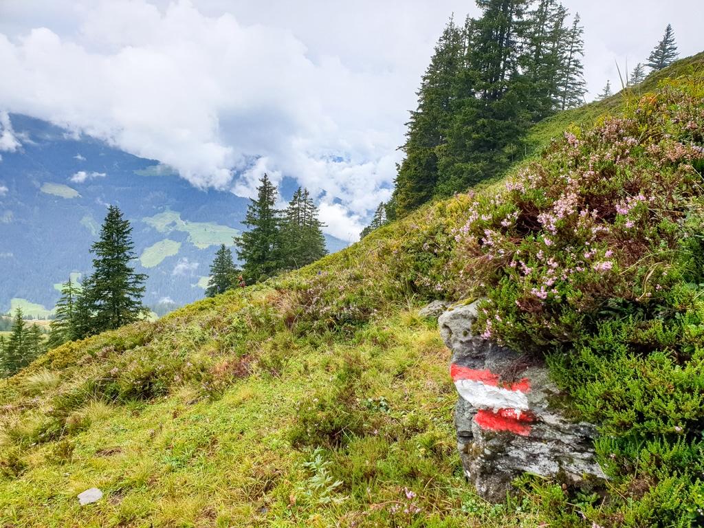Blumen auf einer Alm am Berg