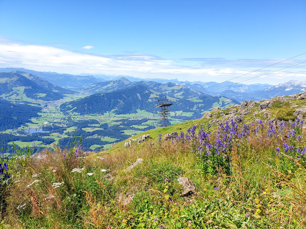 blühende Blumen in den Bergen - dahinter Aussicht auf Kitzbühel