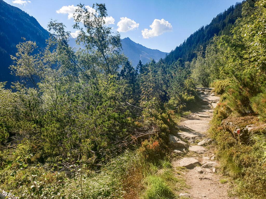 Wanderweg mit einigen Steinen umgeben von Nadelbäumen und Bergen