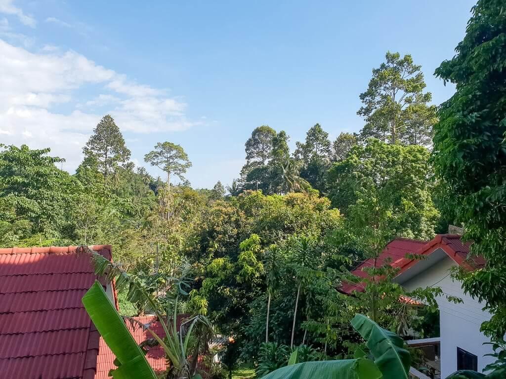 Aussicht auf die Wälder auf Ko Samui; Hausdächer sind in den Bäumen sichtbar