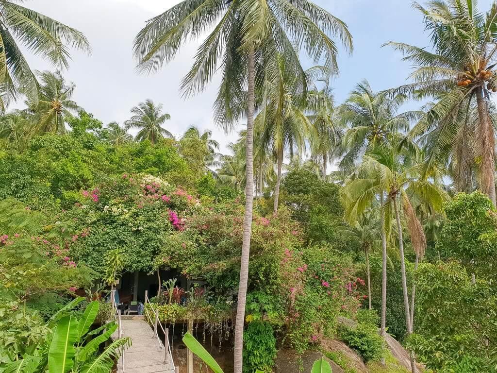 Dschungel auf Ko Samui; Hängebrücke zwischen den Palmen