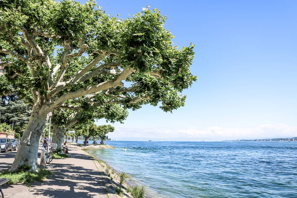 Bodensee zur rechten, links ein Fußweg mit Bäumen