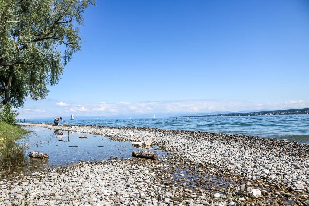 Kieselsteine im Bodensee - ein Baum an der linken Seite