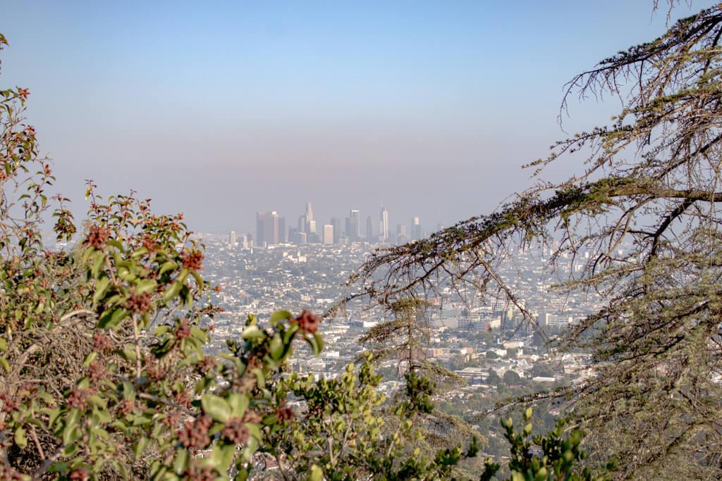 Ausblick auf Los Angeles - im Vordergrund einige Sträucher und Äste