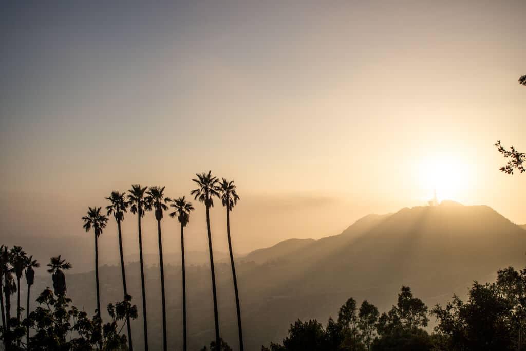 Sonnenuntergang über einem Hügel in Los Angeles - davor mehrere Palmen