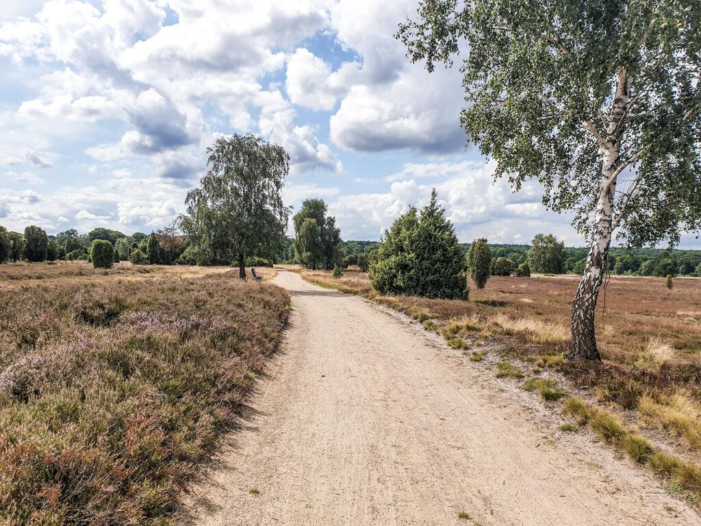 breiter Sandweg führt zwischen lila blühenden Heideflächen hindurch