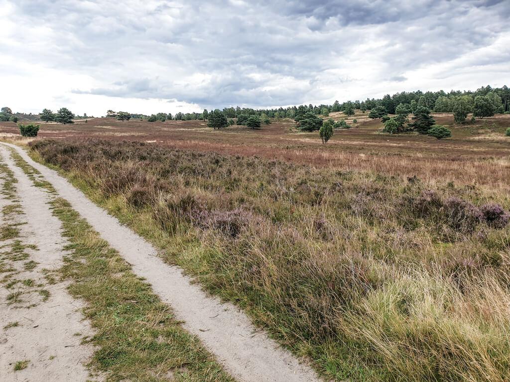 Forstweg führt an der Heide entlang