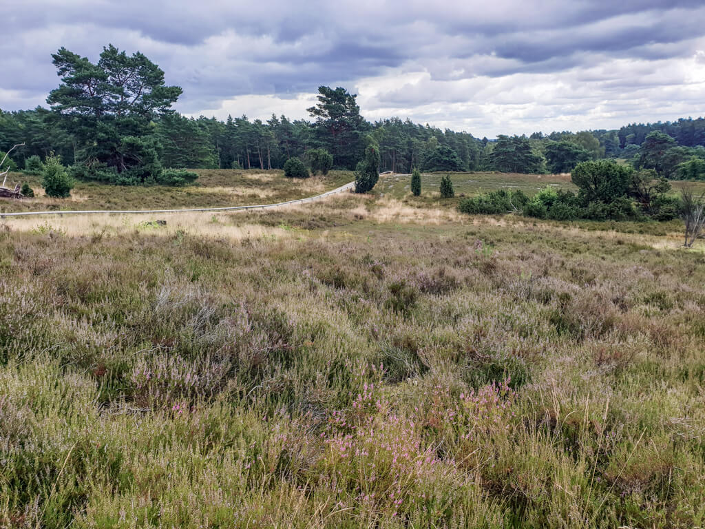 Heidelandschaft mit sandigen Wegen und grünen Bäumen im Hintergrund