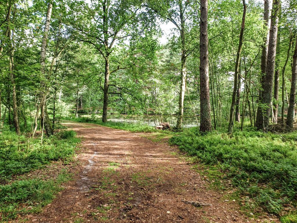 breiter Waldweg führt zwischen grünen Bäumen hindurch