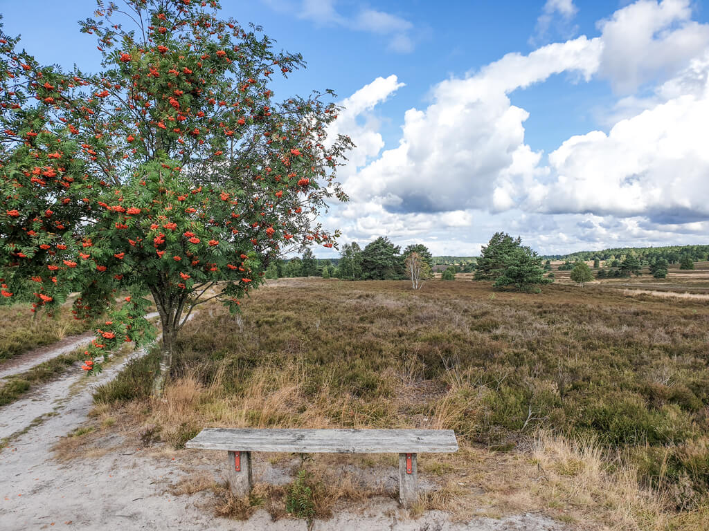 Baum mit einer Holzbank inmitten von Heidelandschaft