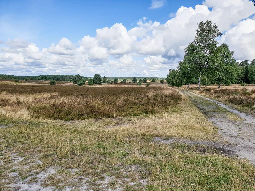Heideflächen mit einem großen Baum im Hintergrund