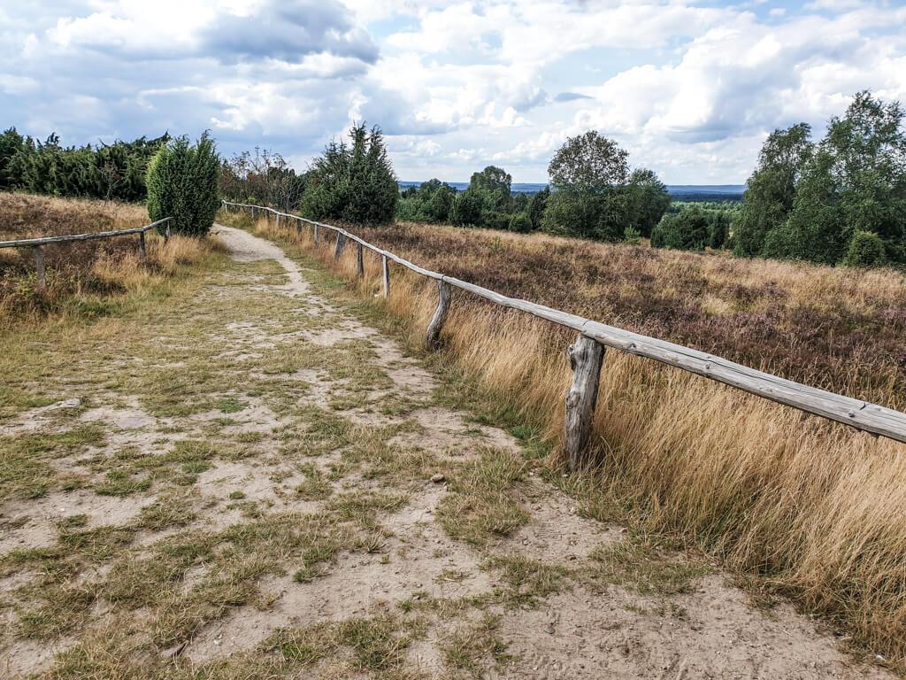 Weg mit Holzlatten am Rand führt durch Heide