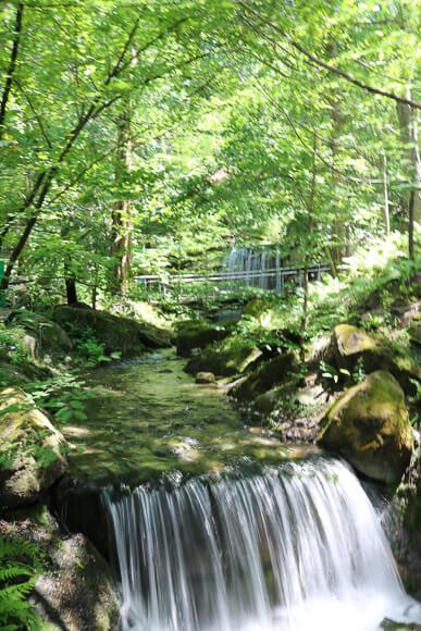 Wasserfall zwischen grünen Bäumen