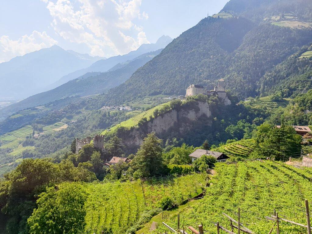Weinberge - dahinter liegt Schloss Tirol auf dem Berg