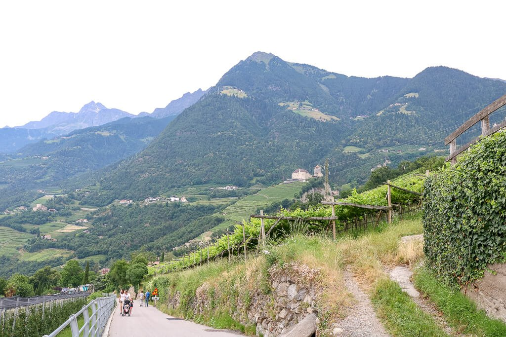Weg zwischen Weinbergen