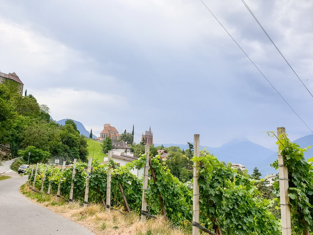 Straße neben Weinbergen, auf einem Hügel sind zwei Kirchen zu sehen