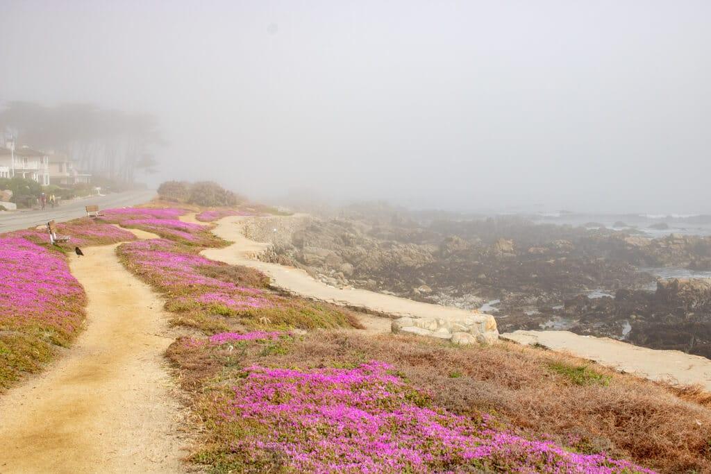 Nebel über einem sandigen Weg mit rosa-farbenen Blumen