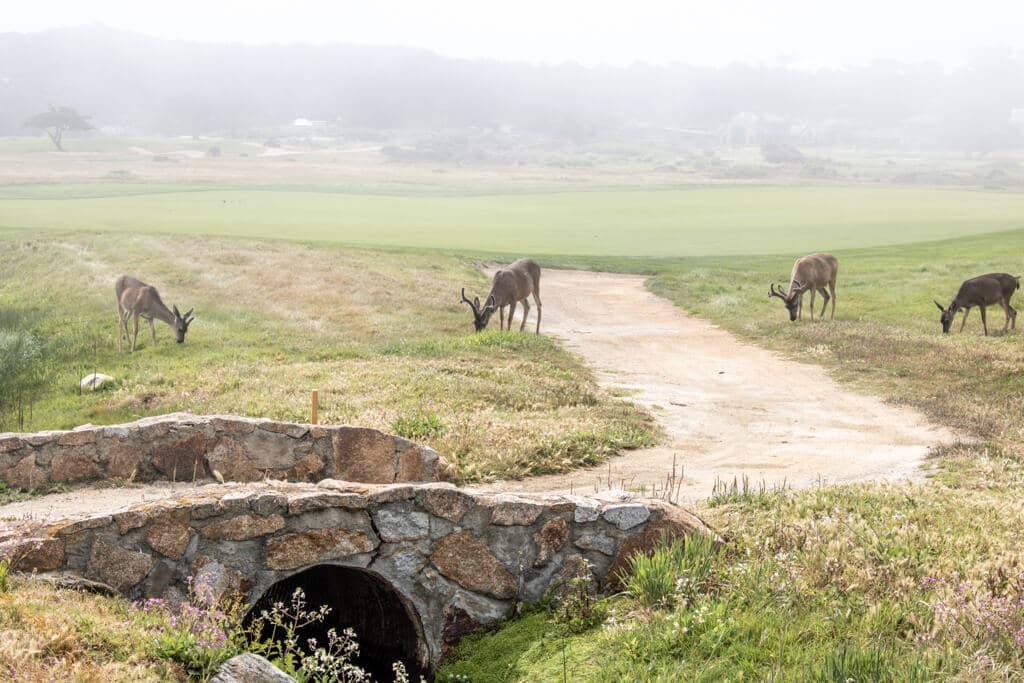 kleine Steinbrücke zwischen Grasflächen - am Wegesrand grasen 4 Rehe