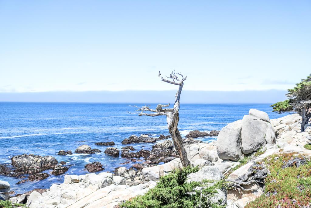 blattloser Baum auf Felsen an der Küste