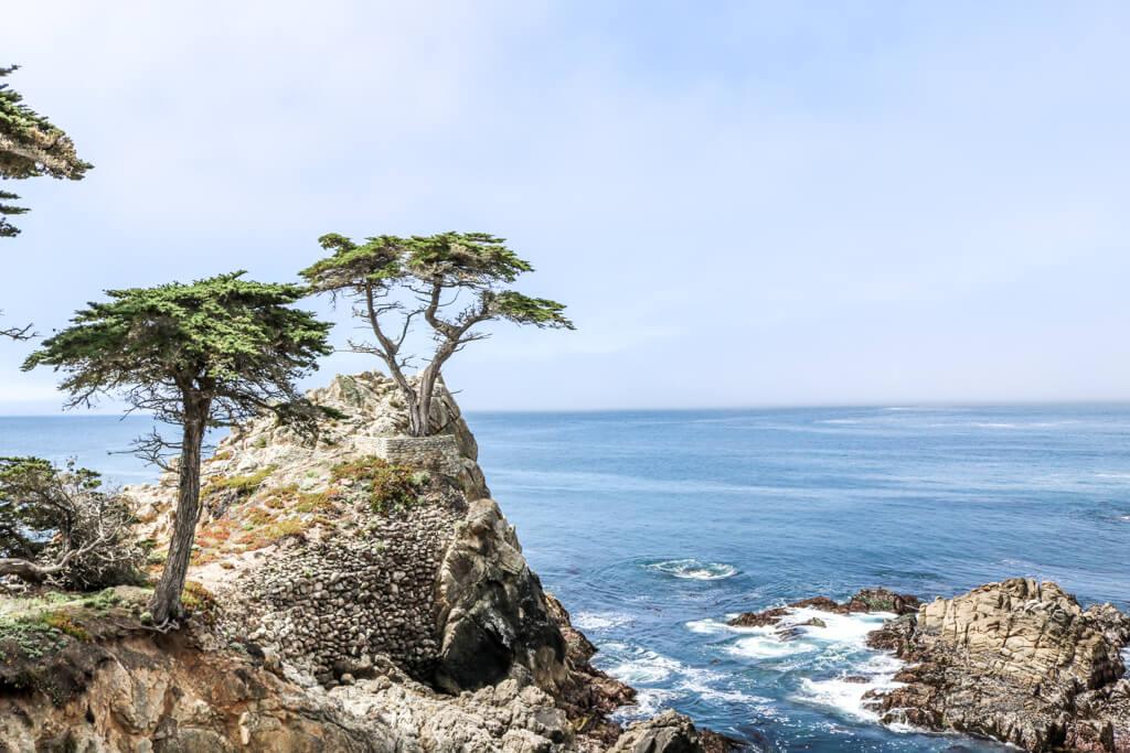 Zypresse auf einem Felsen im Meer