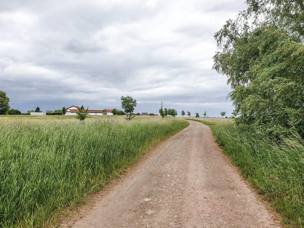 Weg führt zwischen grünen Wegen zum Archäologiepark Martberg