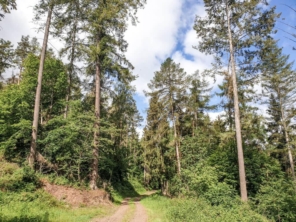 Moselsteig führt durch den Wald