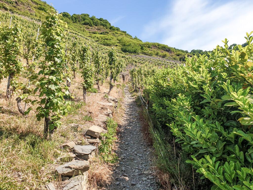 schmaler Wanderweg in den Weinbergen
