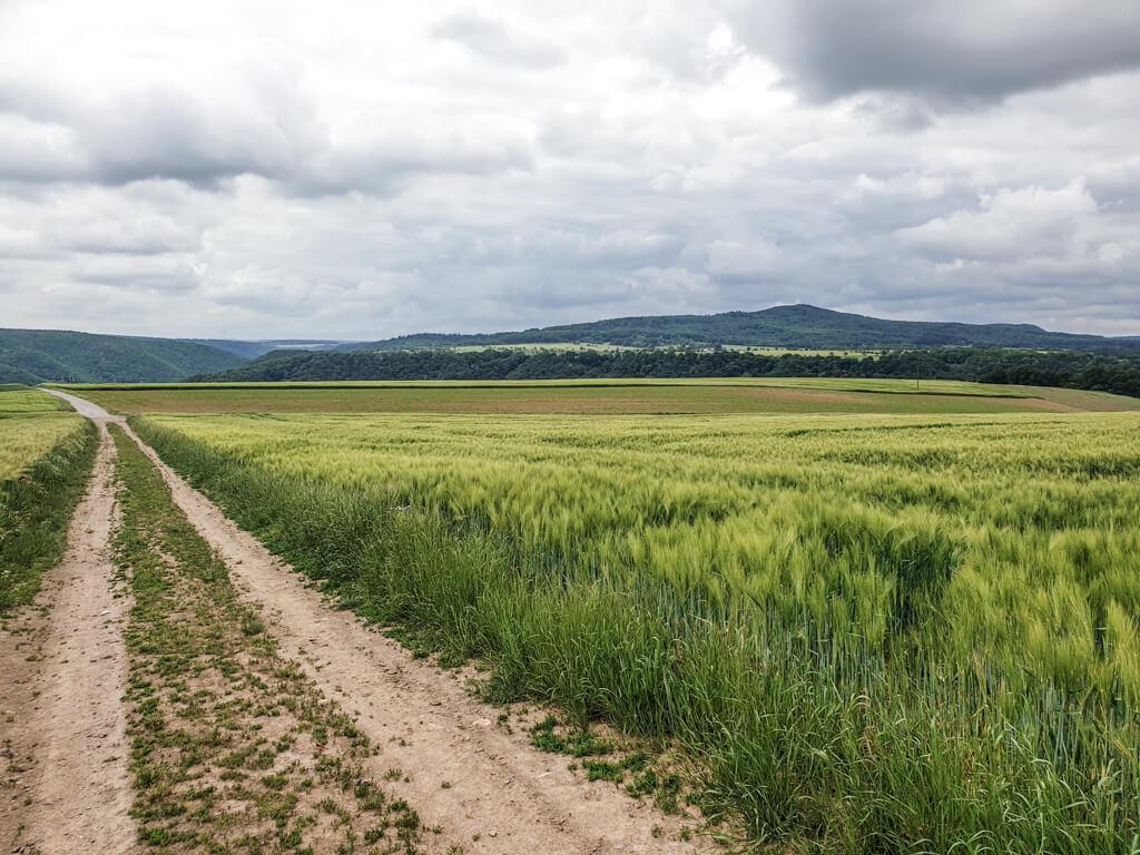 Feldweg führt zwischen grünen Feldern entlang