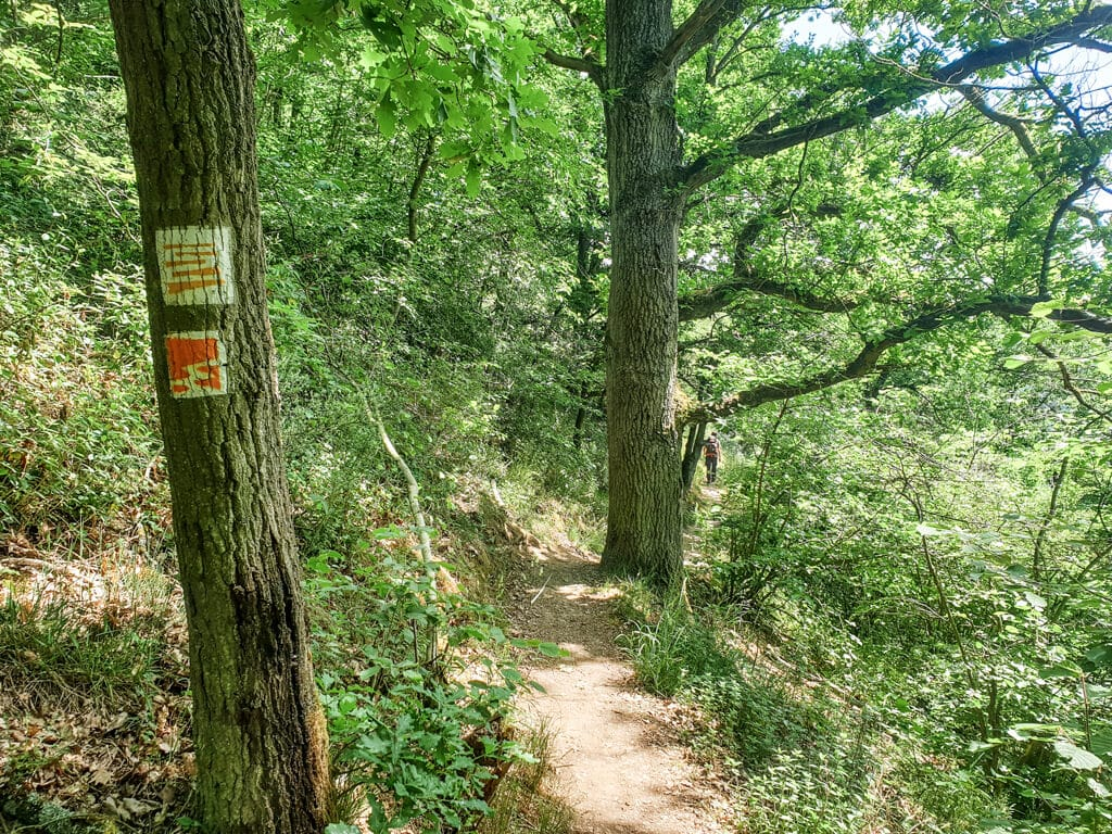 Wanderweg im Wald mit Wanderzeichen des Moselsteig und Traumpfad an einem Baum
