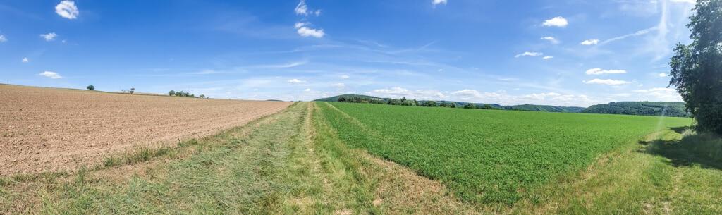 Panoramabild von einem Feld links, einem schmalen Weg und einer grünen Wiese rechts