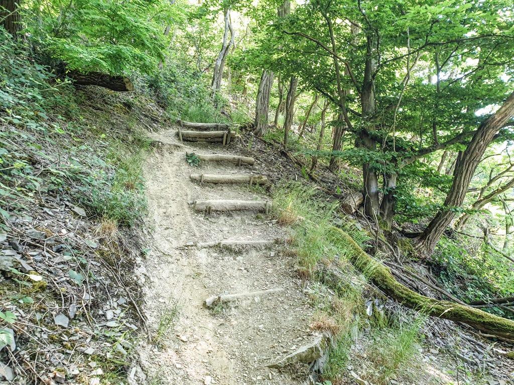 natürliche Treppenstufen mitten im Wald bei einem steilen Anstieg auf dem Weg