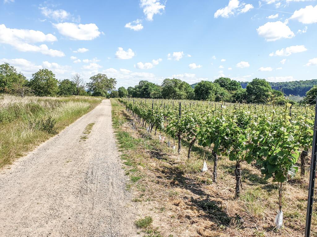 geschotterter Weg führt zwischen Weinbergen entlang - am Horizont grüne Bäume und blauer Himmel mit einigen weißen Wolken