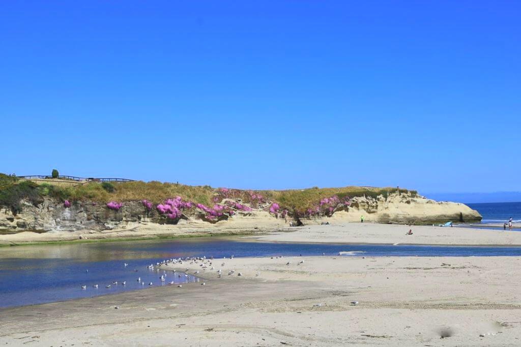Santa Cruz - Strand - Natural Bridges - Blüten