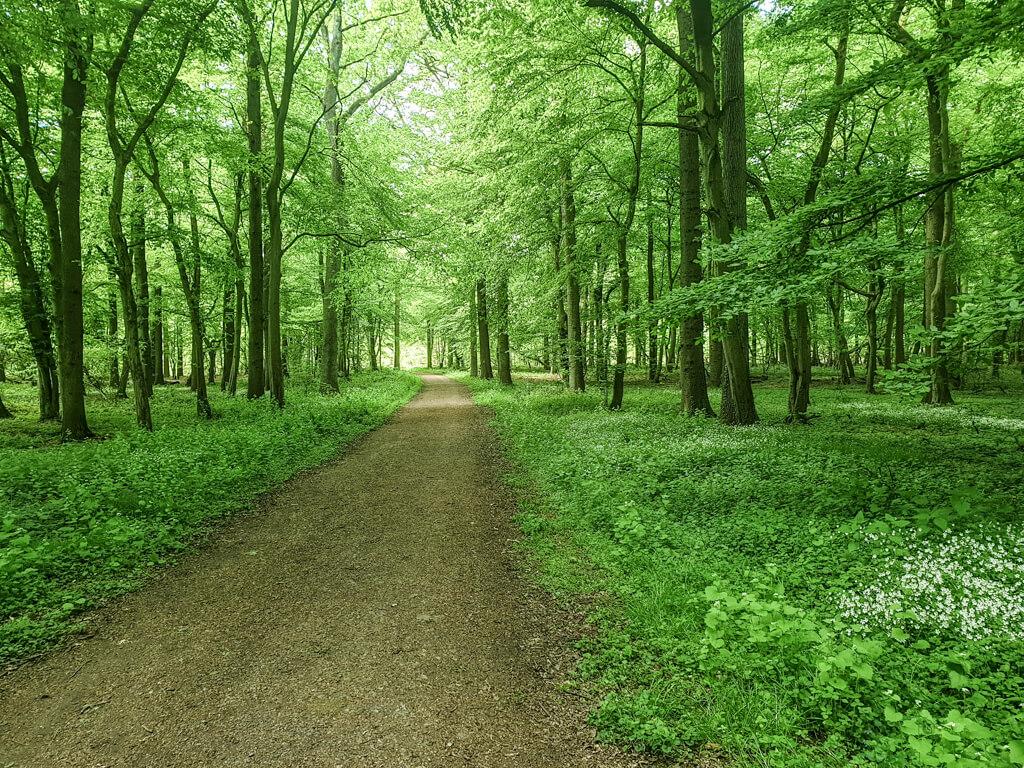 Waldweg führt durch einen grünen Wald im Sonnenschein